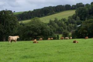 Look!! Cows!!