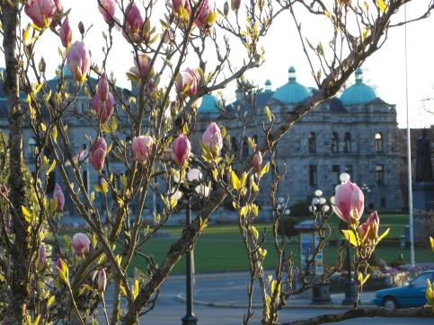 Victoria, B.C. - April 2013 - Parliament through the blooms!