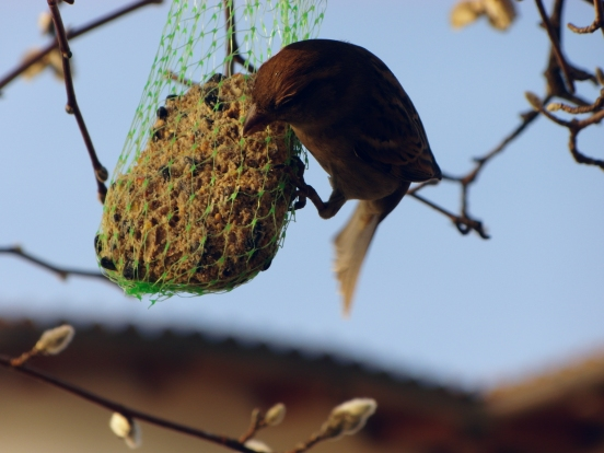 Up close and personal with the birds of Locarno